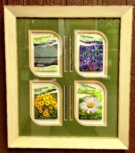 seed packets (gallery)